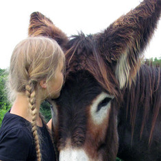 Ein Mädchen küsst einen Esel