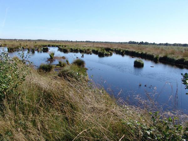 Im Naturschutzgebiet Recker Moor