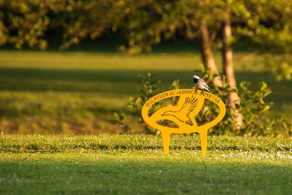 Golfclub Dütetal Golfplatz Tecklenburger Land