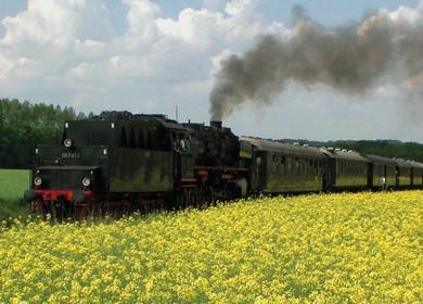 Historische Dampflok 50 3655 im gelben Rapsfeld